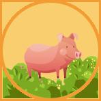 nutritious confinement food - pork